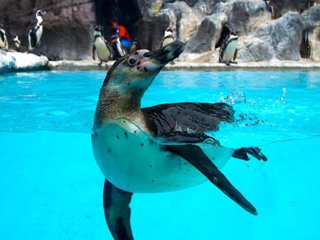 20130414 鳥羽 よりぬきペンギン17
