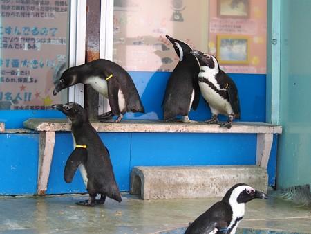 20130414 二見 ペンギン舎08