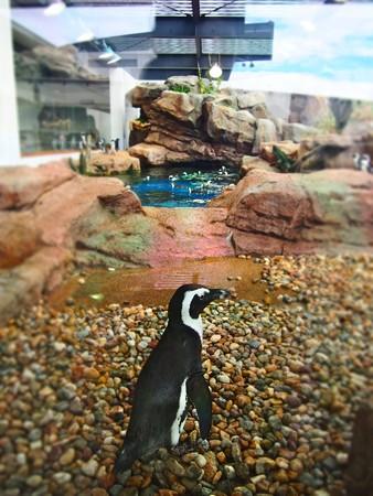 20130905 京都水 ペンギンプール01