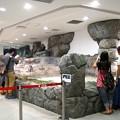 Photos: 20130905 海遊館 イワトビプール03