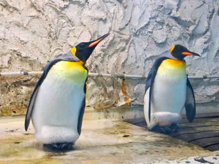 20130906 天王寺 オウサマペンギン02