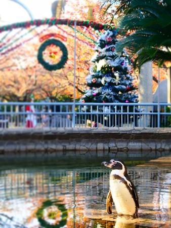 20131116 江戸川 クリスマスはんぺん