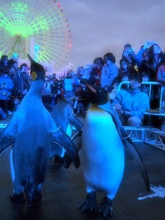 20131208 海遊館 イルミキング02