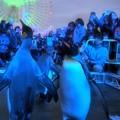 Photos: 20131208 海遊館 イルミキング02