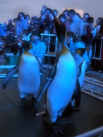20131208 海遊館 イルミキング01