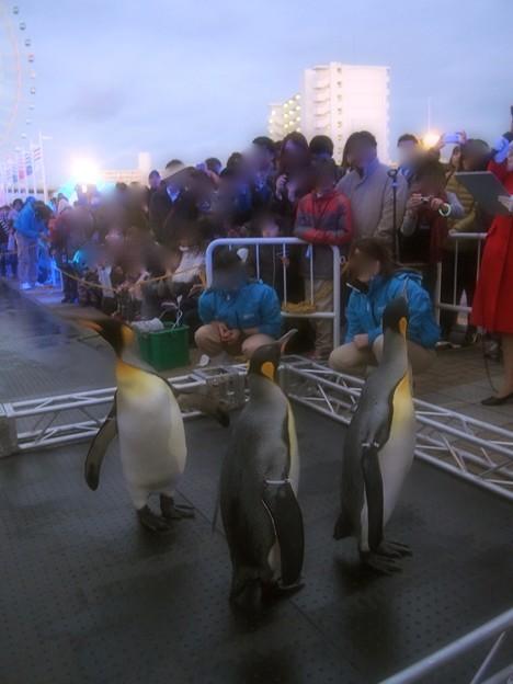 Photos: 20131208 海遊館 イルミキング05