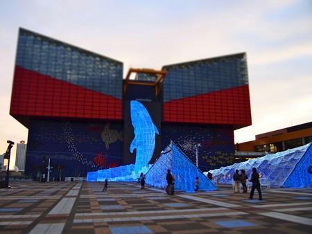 20131208 海遊館 イルミキング03