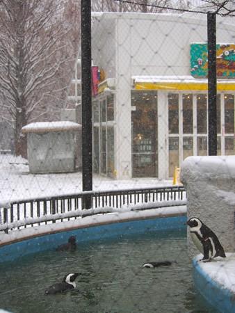 20130208 上野 雪の日12