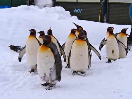 20140124 旭山 ペンギンの散歩17