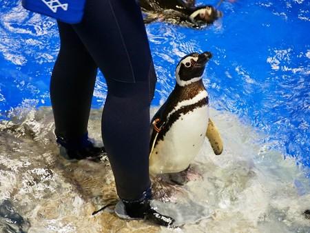 20140301 すみだ ペンギンたち03