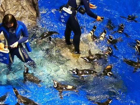 20140301 すみだ ペンギンたち02