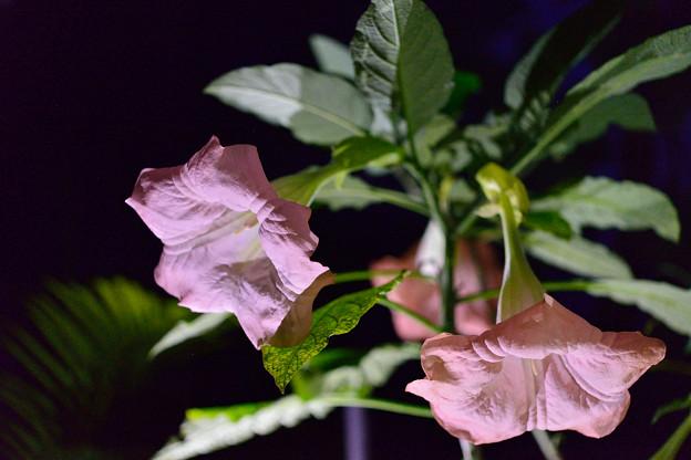 夜の花・・