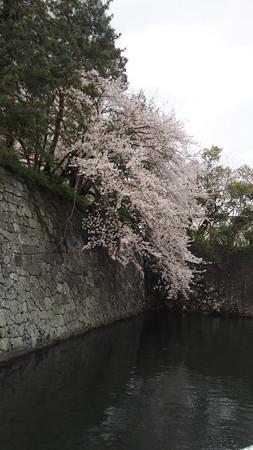 駿府城の春