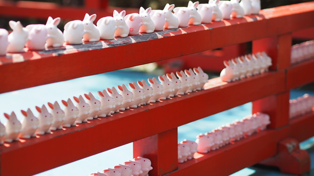 Photos: 岡崎神社のうさぎ