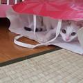 Photos: にくきゅうばんざい!