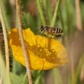 Bee-ing 7ハチ7