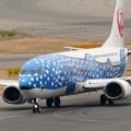 Photos: サメ肌