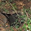 写真: 芝生古墳奥壁側開口部