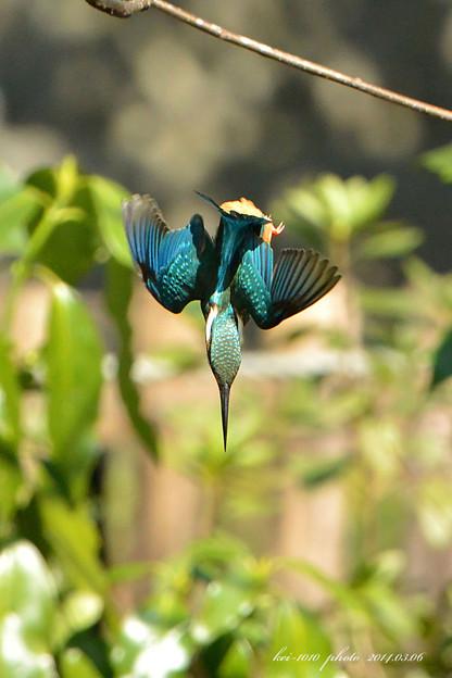 羽を広げてバランス調整