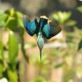 Photos: 羽を広げてバランス調整