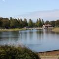 Photos: 水鳥の池(2012/10)