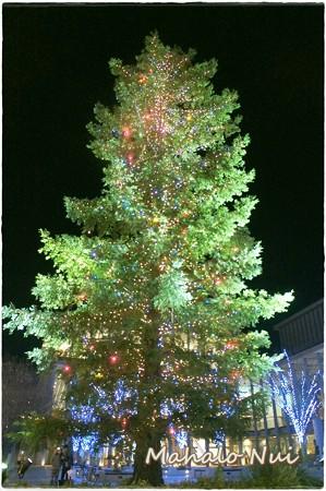 阪急西宮駅のとっても大きなツリー