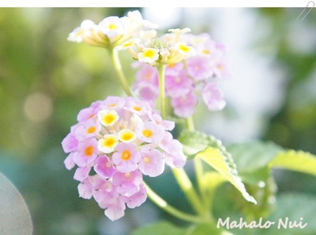散歩中に見かけたかわいい小花