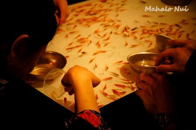 写真: 夢中で金魚すくい
