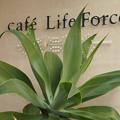 Photos: Life Force