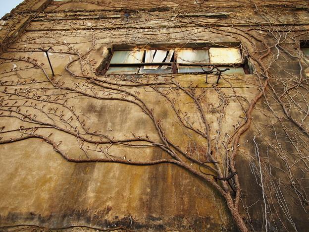 Photos: 廃屋の壁画