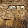 廃屋の壁画