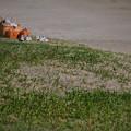 2310_浜辺のピクニック