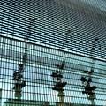 写真: 檻の中の3頭のキリン