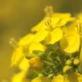 陽だまりの黄色