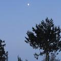 2013朝月木上