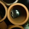 Photos: 20121027 45cmプレコ水槽のファンシースポットペコルティア