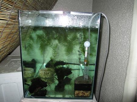 20121122 60cmベランダ水槽