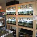 20121123 ローキーズ京都の店内