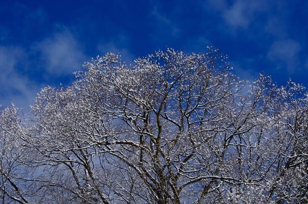 三度目の雪 2