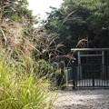 Photos: 大津皇子墓