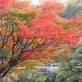 相楽園の秋