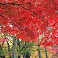 Photos: 奈良公園から大仏池へ