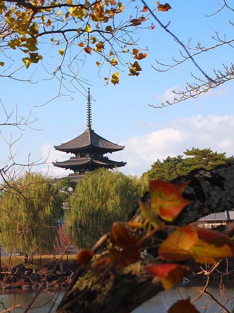 Photos: 興福寺五重塔