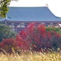 Photos: 平城宮跡にて