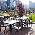Photos: 中之島公園バラ園