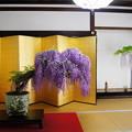 盆藤展(1)