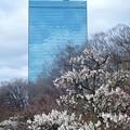 クリスタルタワーと