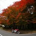 写真: 紅葉を探しに5