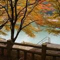 写真: 紅葉を探しに2