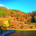 Photos: 奥多摩湖 ドラム缶橋